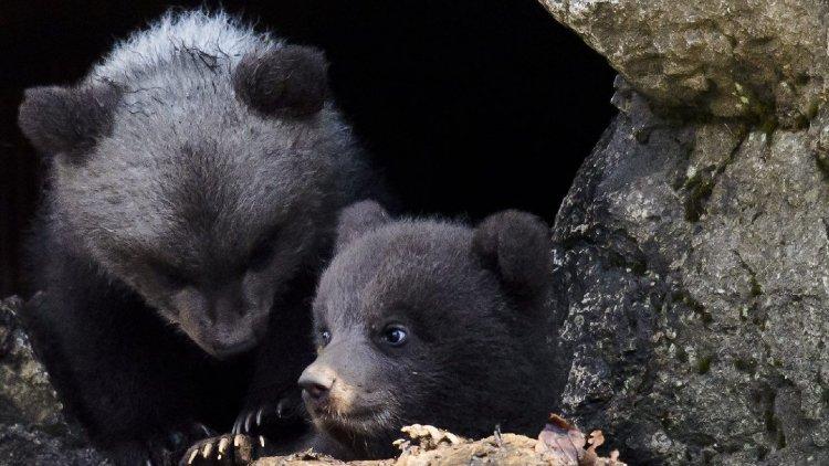 Mikor jön a tavasz? Ma kell figyelnünk a medvék barlangjait