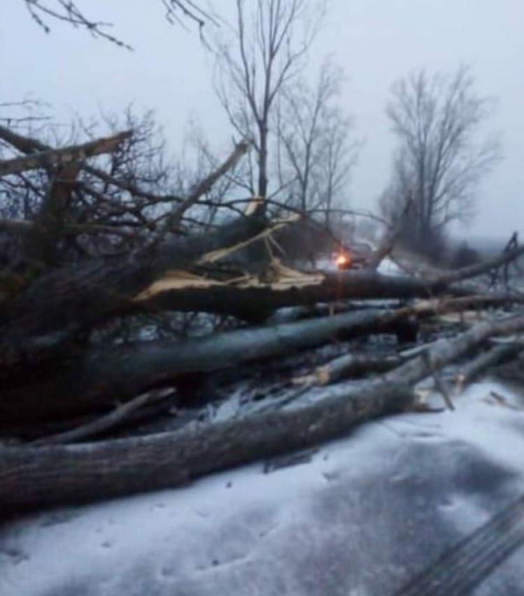 Viharos szél, kidőlt fák – Rengeteg hívás érkezett a katasztrófavédelemhez