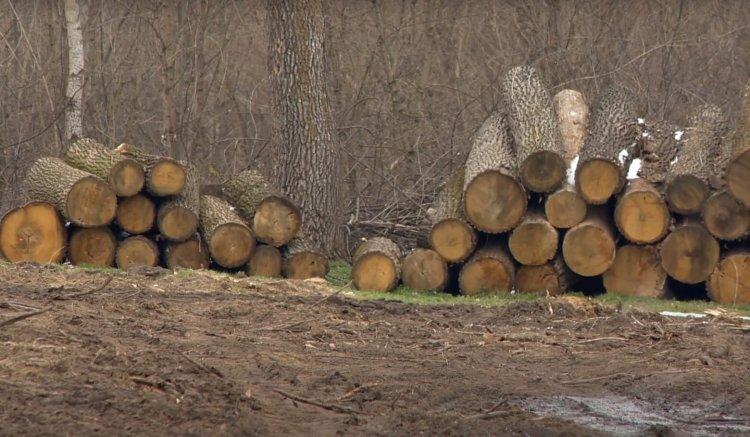 Az elmúlt fél év szeszélyes időjárása miatt sok feladattal csúsztak a Nyírségi Erdészetben
