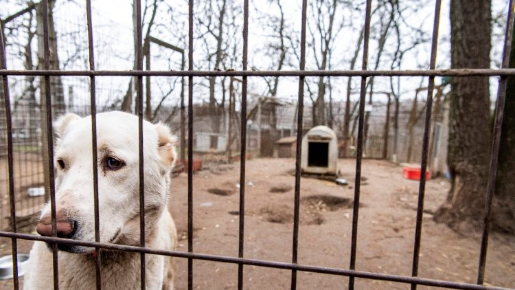 200 ezren töltötték ki az állatvédelmi kérdőívet