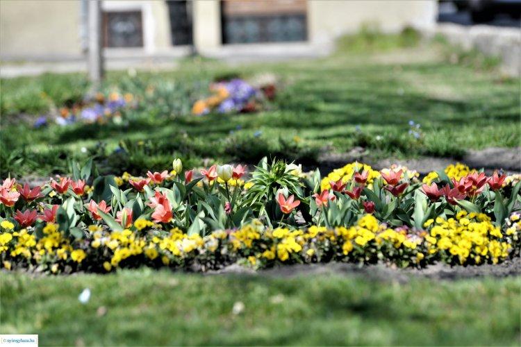 Idén is meghirdetik a Szomszéd fűje mindig zöldebb! városszépítő akciót