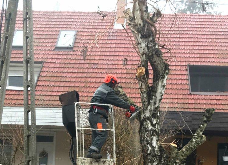 Faápolási munkálatokat végez a NYÍRVV a Sarló utcán március 10-én