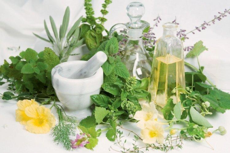 Az emésztőrendszerre ható gyógynövények - Hajdu Zsanett online előadása