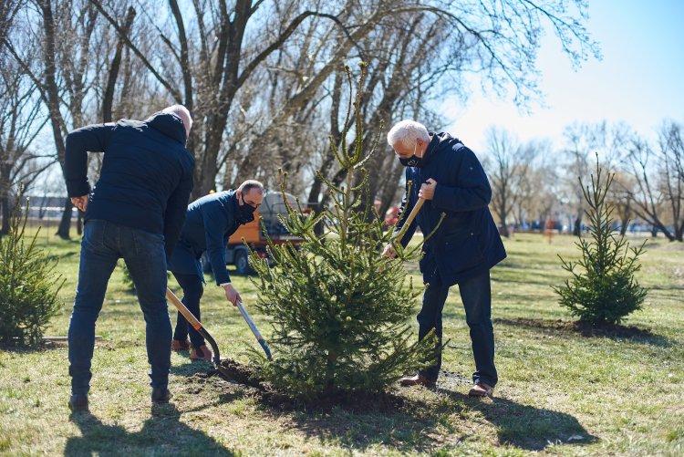 Ültess egy karácsonyfát! – Együtt egy még zöldebb Nyíregyházáért!