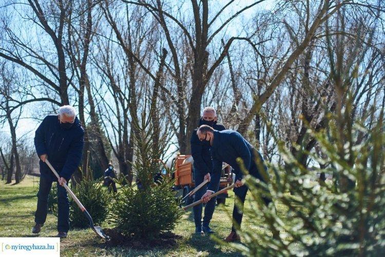 Ültess egy karácsonyfát! – 34 darab gyökeres fenyőt ültettek el a Bujtosi Városligetben