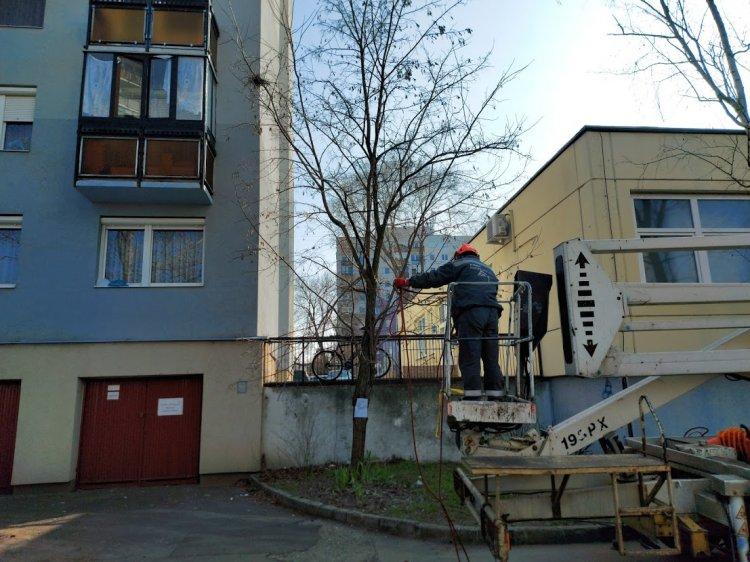 Orvosi rendelőre hajlott ágakat vágtak le a NYÍRVV szakemberei a Toldi utcán