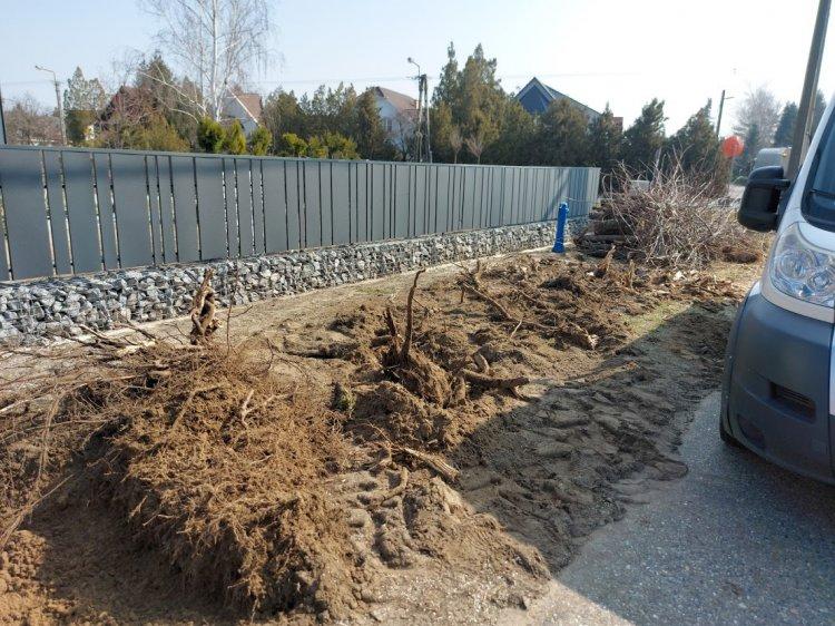 Illegális favágást végeztek a Jósika Miklós utcán