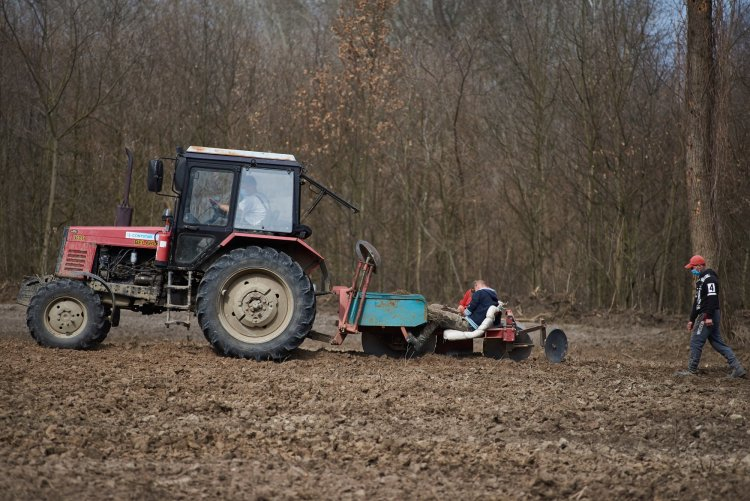 Erdőfelújítás Sóstón – Több ezer kocsányos tölgyet ültetett a Nyírerdő Zrt.