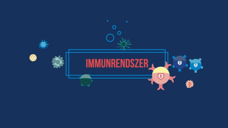 Ebből a videóból mindent megtudhat az immunrendszerről