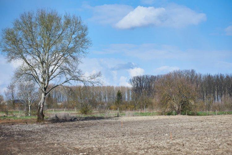 Új erdőrész Nyíregyházán – Több ezer fát ültetnek el az Igrice-mocsár mellett