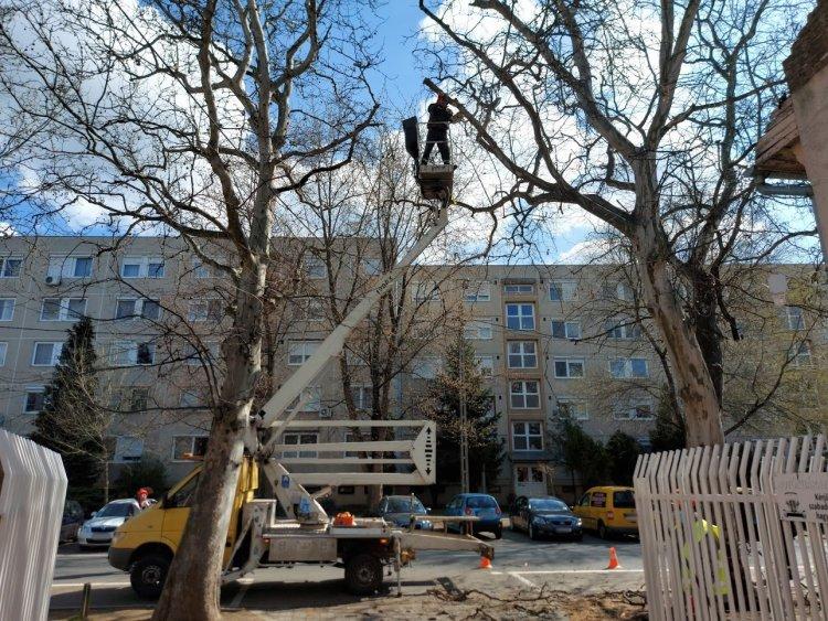 Favágási munkálatokat végeztek a NYÍRVV munkatársai a Vasvári Pál utcán
