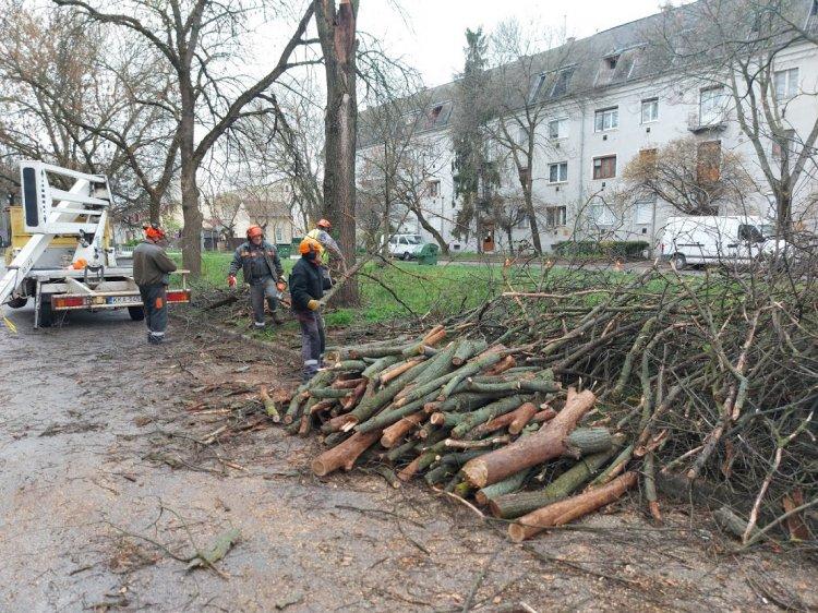Teljes útzár mellett favágási munkálatok zajlottak csütörtökön a Toldi utcán