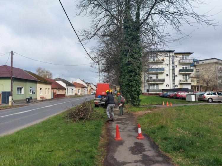 Forgalomkorlátozás mellett levágták a villamos vezetékre hajolt ágakat a Kállói úton