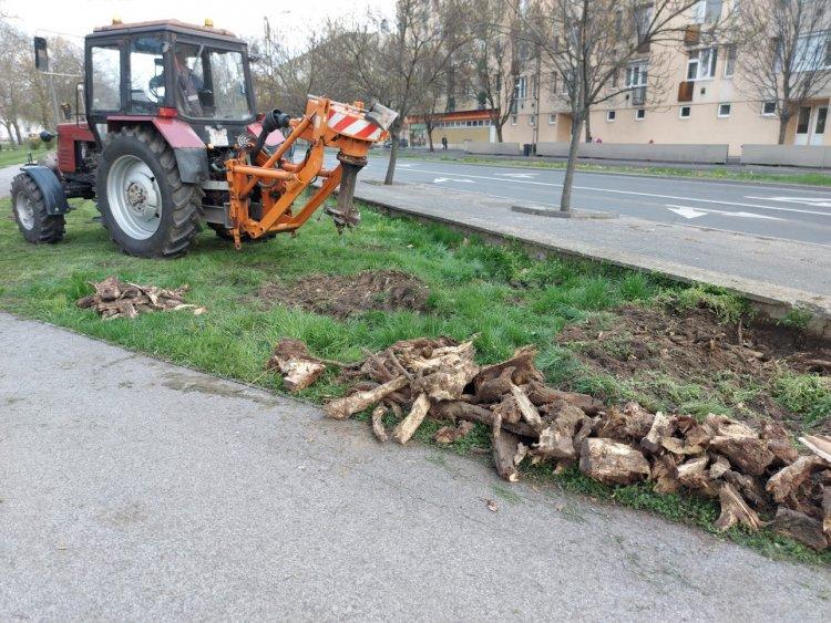 Tuskózási munkálatokat végeznek a Petőfi téren
