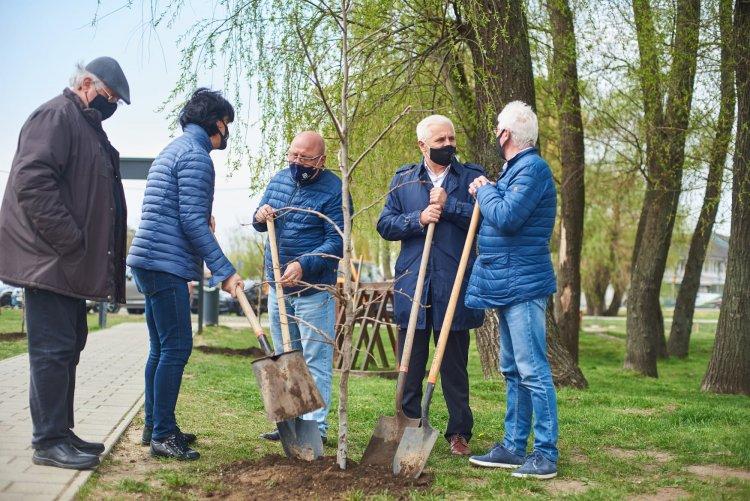 Faültetés – 20 darab előnevelt amerikai ámbrafát ültettek el a Bujtosi Városligetben