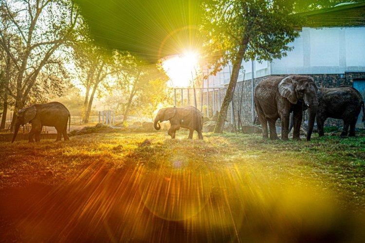 Május elsejétől ismét nyitva a Nyíregyházi Állatpark