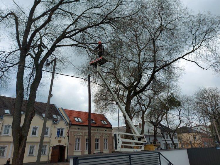 Favágási, faápolási munkálatokat végeztek a NYÍRVV szakemberei a Dózsa György utcán