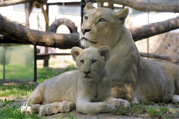 Kinyitott a Nyíregyházi Állatpark – Védettségi igazolvánnyal újra látogatható a park