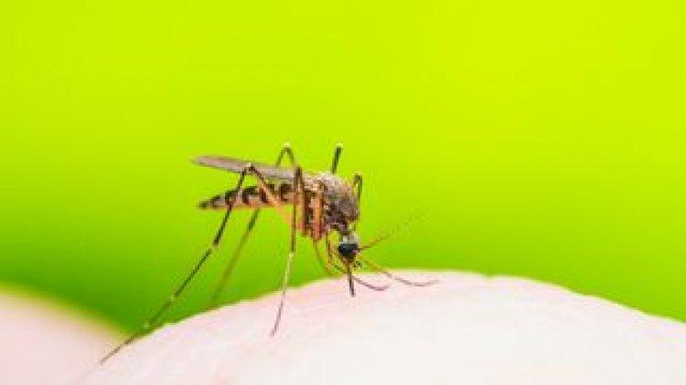 NYÍRVV: május 10-én megkezdődik a szúnyoglárva-irtás Nyíregyházán