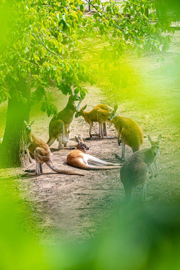 Egy csokornyi bébi – Kopogtatott a gólya a Nyíregyházi Állatparkban