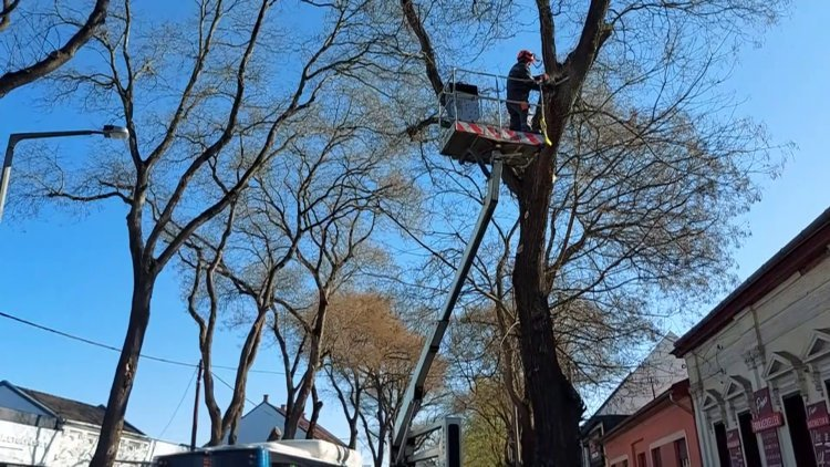 Faápolási munkálatokat fognak végezni a NYÍRVV Nonprofit Kft. szakemberei