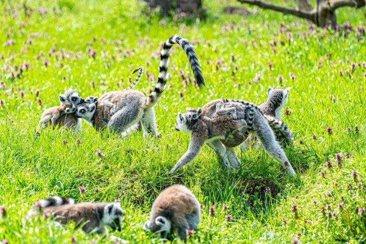 Állatbébik: a Nyíregyházi Állatpark több kifutójában is kopogtatott a gólya