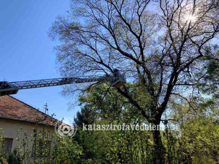 Megdőlt, veszélyt jelentő fát távolítottak el a tűzoltók a  nyíregyházi Bojtár utcából