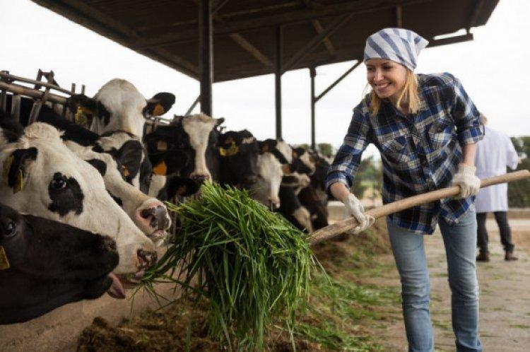Uniós pályázat indul mezőgazdasági vállalkozásoknak