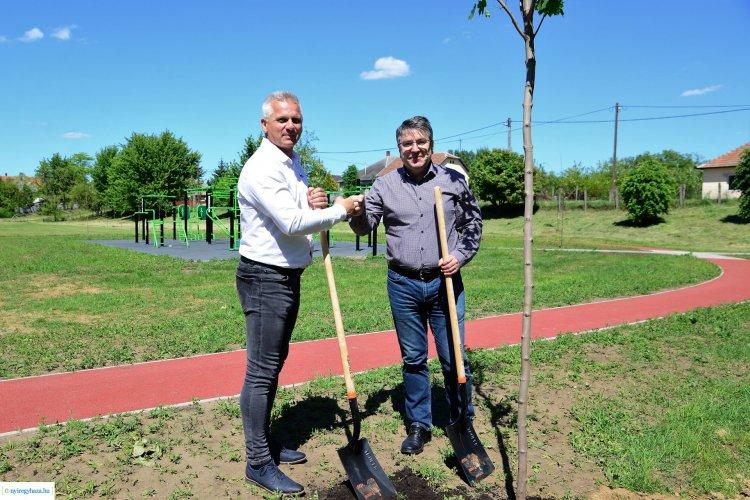 Újabb faültetés Nyíregyházán – 55 darab fát ültettek az új nyírszőlősi kondipark mellett