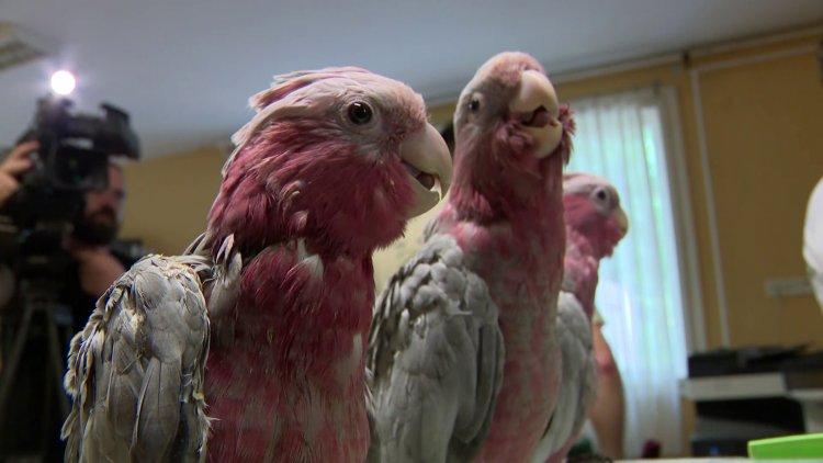 7 papagájféle a madárovi legújabb lakója a Nyíregyházi Állatparkban