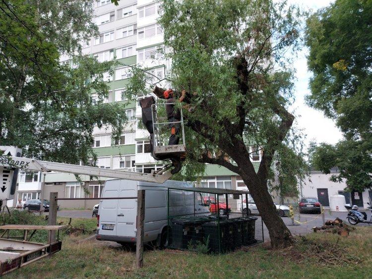 Parkoló jármű akadályozta a faápolási munkálatokat a Sóstói úton