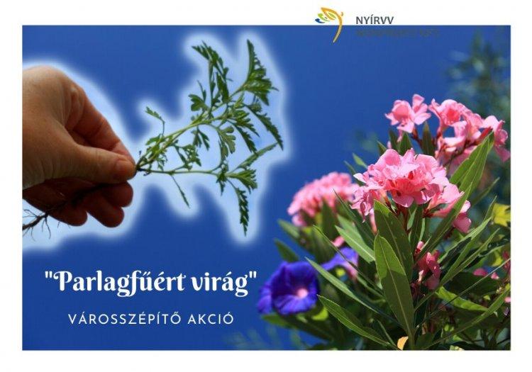 Parlagfűért virágot – Három nap alatt több mint tízezer tő gyomnövényt adott le a lakosság