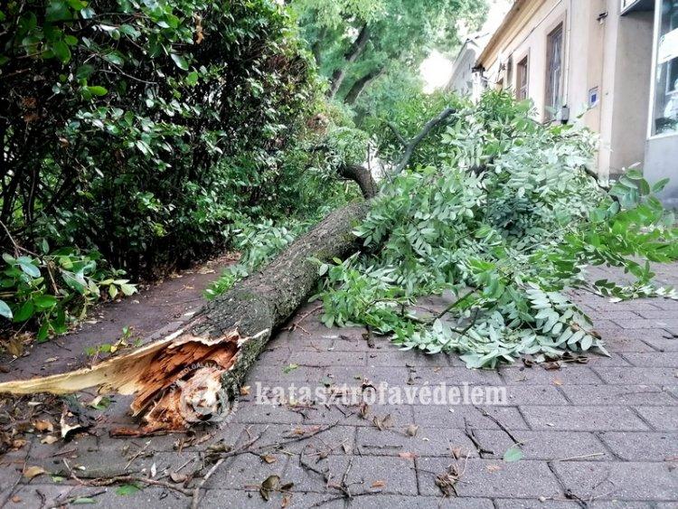 Friss tájékoztatás érkezett a Katasztrófavédelemtől: viharkárok megyénkben