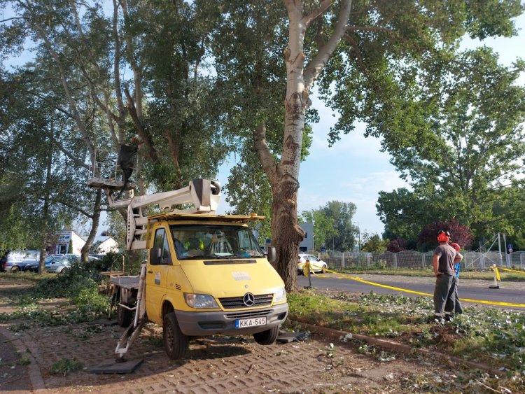 Viharkár – Favágási munkálatokat végeznek a Törzs utcán