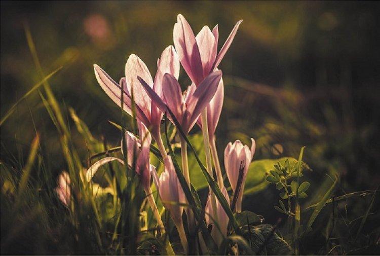Virágzó értékeink - Fekete Tibor fotókiállítása a Butykai Közösségi Házban