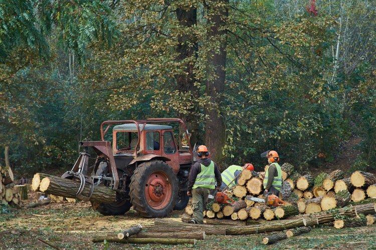 Fakitermelés – Két területen kezdtek favágásba a Sóstói-erdőben