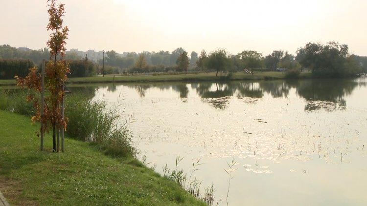Haltelepítés volt szerda reggel a Bujtoson – 1200 kg pontyot telepített a halászati kft.